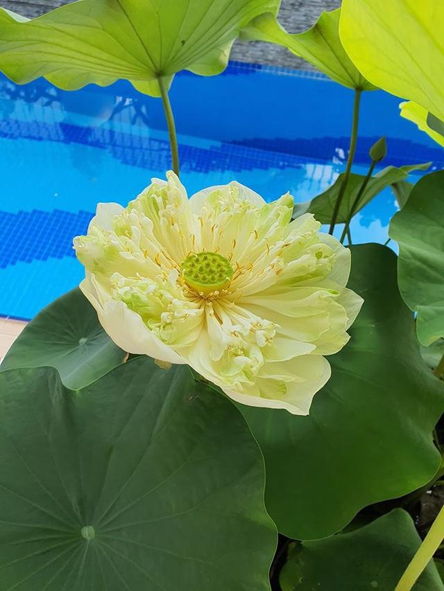 Khu vườn ngập sắc hoa trong biệt thự của Vũ Thu Phương - Ảnh 7.
