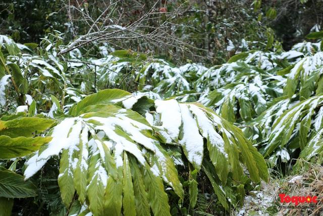 Cận cảnh băng tuyết phủ trắng các triền nùi ở Y Tý - Ảnh 9.