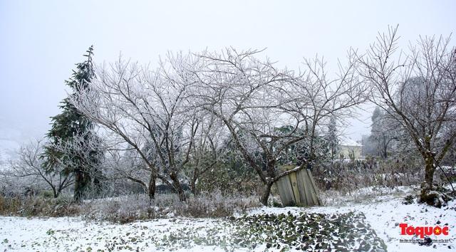 Cận cảnh băng tuyết phủ trắng các triền nùi ở Y Tý - Ảnh 6.