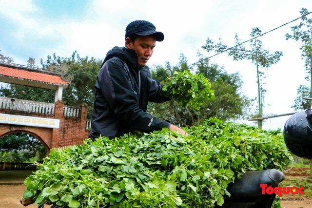 """Nông dân đội rét thu hoạch """"rau siêu sạch"""" trồng trên giếng cổ - Ảnh 12."""