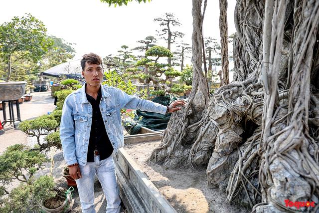 Cây sanh cổ dáng lạ được rao bán 700 triệu ở Hà Nội - Ảnh 3.