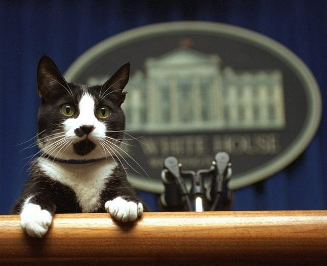 """Thú cưng """"tái xuất"""" Nhà Trắng và """"giấc mơ Mỹ của mọi chú chó"""" - Ảnh 2."""