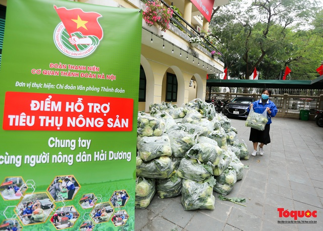 Hà Nội: Chung tay giải cứu nông sản giúp người nông dân Hải Dương - Ảnh 1.