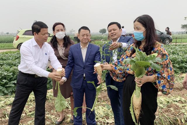 Chủ tịch huyện Mê Linh: Không có chuyện nông sản thừa hay cần giải cứu - Ảnh 1.