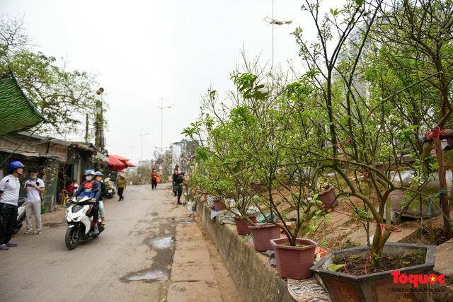 Sau Tết Nguyên đán người dân thủ đô bỏ tiền triệu mua cây bưởi về chơi - Ảnh 1.