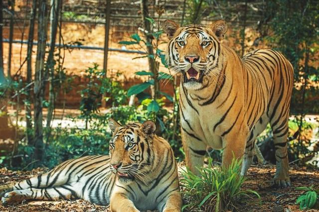 """Một ngày vào vai """"nhà động vật học"""" giữa """"thiên đường hoang dã"""" Vinpearl Safari - Ảnh 2."""