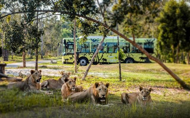 """Một ngày vào vai """"nhà động vật học"""" giữa """"thiên đường hoang dã"""" Vinpearl Safari - Ảnh 3."""