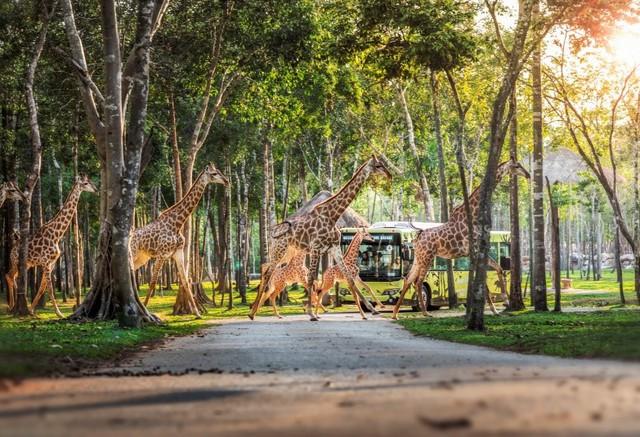 """Một ngày vào vai """"nhà động vật học"""" giữa """"thiên đường hoang dã"""" Vinpearl Safari - Ảnh 4."""