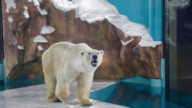 Bất ngờ xuất hiện khách sạn gấu Bắc Cực đầu tiên trên thế giới  - Ảnh 1.