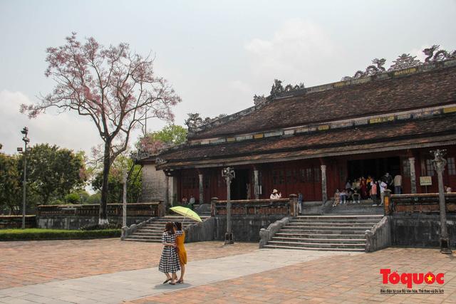 Du khách thích thú ngắm hoa ngô đồng nở rộ trong Hoàng cung Huế - Ảnh 10.