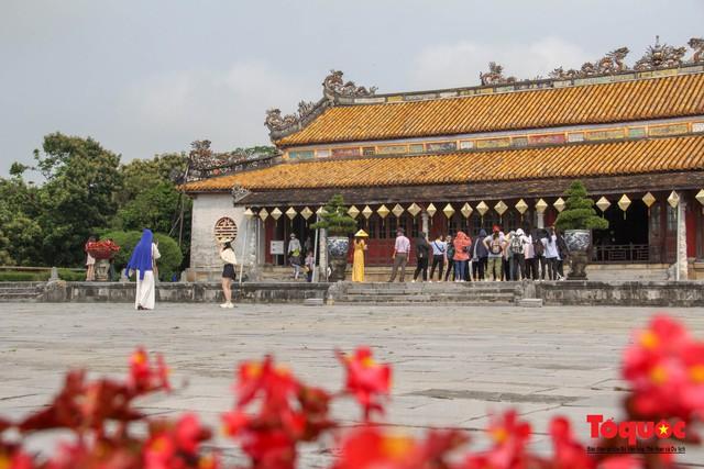 Du khách thích thú ngắm hoa ngô đồng nở rộ trong Hoàng cung Huế - Ảnh 1.
