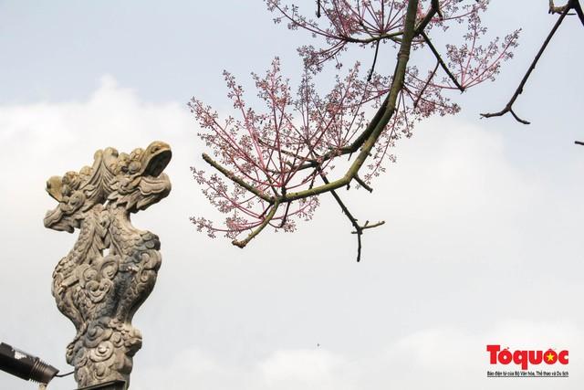 Du khách thích thú ngắm hoa ngô đồng nở rộ trong Hoàng cung Huế - Ảnh 6.