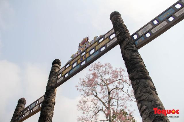 Du khách thích thú ngắm hoa ngô đồng nở rộ trong Hoàng cung Huế - Ảnh 5.
