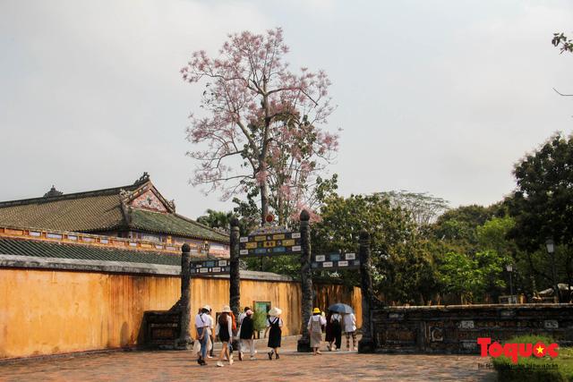 Du khách thích thú ngắm hoa ngô đồng nở rộ trong Hoàng cung Huế - Ảnh 11.