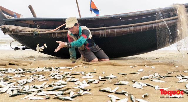 Ngư dân Thừa Thiên Huế phấn khởi ra khơi bắt đầu vào vụ đánh bắt cá trích - Ảnh 3.