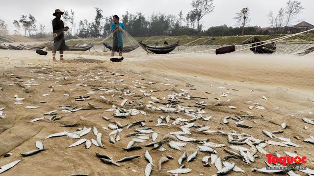 Ngư dân Thừa Thiên Huế phấn khởi ra khơi bắt đầu vào vụ đánh bắt cá trích - Ảnh 1.