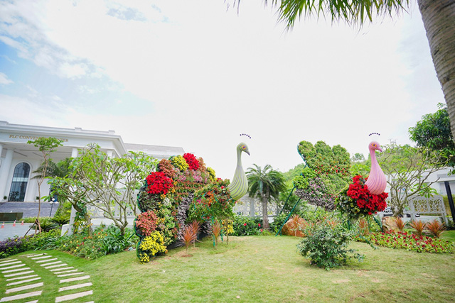 Thưởng thức ngàn hoa khoe sắc trên đồi cao tại lễ hội hoa Hạ Long - Ảnh 1.