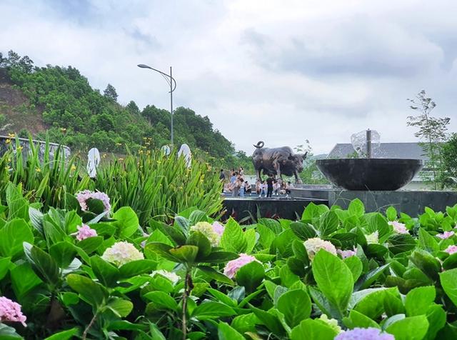 Thưởng thức ngàn hoa khoe sắc trên đồi cao tại lễ hội hoa Hạ Long - Ảnh 11.