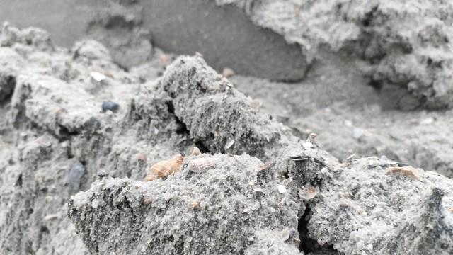 Lập biên bản, xử lý hàng trăm khối cát lẫn vỏ sò biển tại dự án làm đường - Ảnh 3.