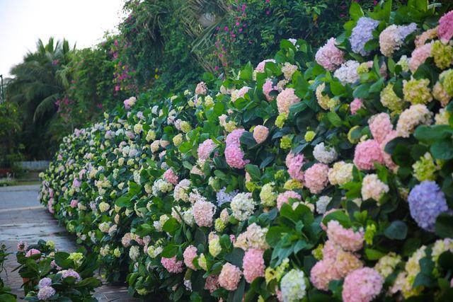 Du khách háo hức check in trước thềm Lễ hội hoa Sầm Sơn - Ảnh 3.