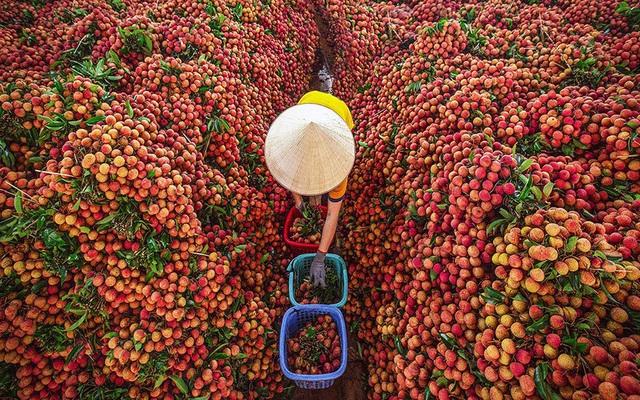 Chính phủ yêu cầu hỗ trợ tiêu thụ nông sản giúp tỉnh Bắc Giang - Ảnh 1.