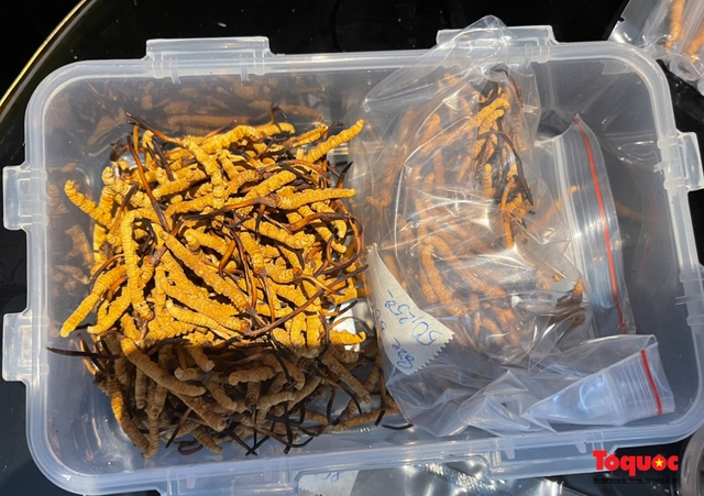 Hà Nội: Bắt giữ lô Đông trùng hạ thảo Tây tạng không rõ nguồn gốc lớn nhất từ trước đến nay - Ảnh 3.