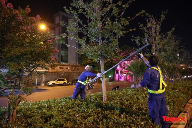 Hàng cây phong lá đỏ ở Hà Nội được di dời ngay trong đêm - Ảnh 3.