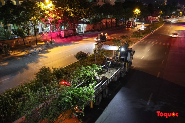 Hàng cây phong lá đỏ ở Hà Nội được di dời ngay trong đêm - Ảnh 11.
