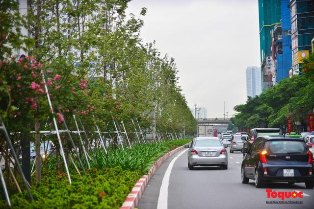 Hàng cây phong lá đỏ ở Hà Nội được di dời ngay trong đêm - Ảnh 1.
