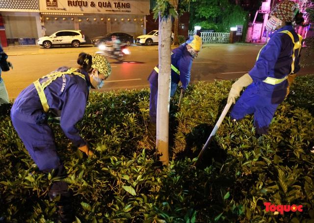 Hàng cây phong lá đỏ ở Hà Nội được di dời ngay trong đêm - Ảnh 4.