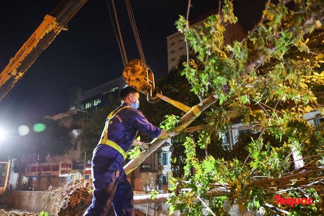 Hàng cây phong lá đỏ ở Hà Nội được di dời ngay trong đêm - Ảnh 10.