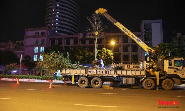Hàng cây phong lá đỏ ở Hà Nội được di dời ngay trong đêm - Ảnh 2.