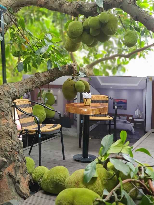 Quán cà phê độc lạ ở Tuyên Quang có cây mít trĩu quả mọc giữa nhà  - Ảnh 7.