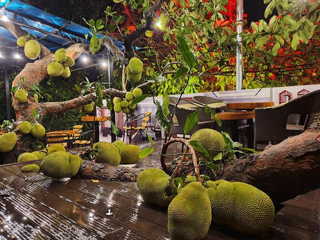 Quán cà phê độc lạ ở Tuyên Quang có cây mít trĩu quả mọc giữa nhà  - Ảnh 3.