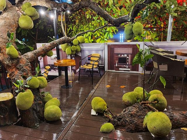 Quán cà phê độc lạ ở Tuyên Quang có cây mít trĩu quả mọc giữa nhà  - Ảnh 2.