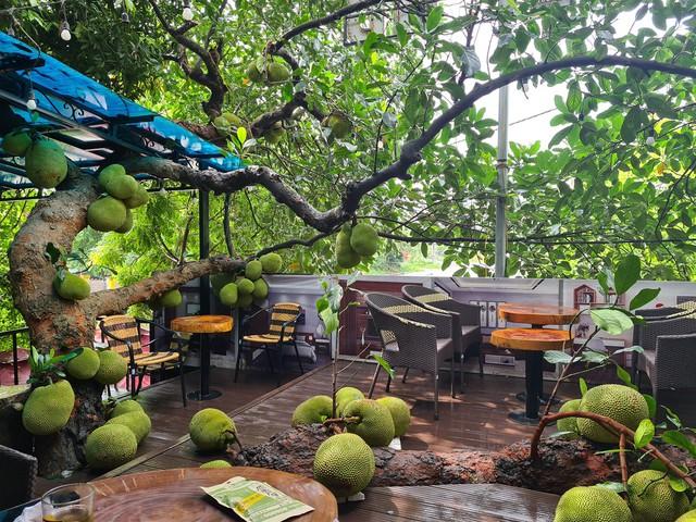 Quán cà phê độc lạ ở Tuyên Quang có cây mít trĩu quả mọc giữa nhà  - Ảnh 9.