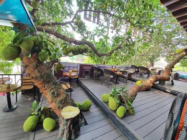 Quán cà phê độc lạ ở Tuyên Quang có cây mít trĩu quả mọc giữa nhà  - Ảnh 4.