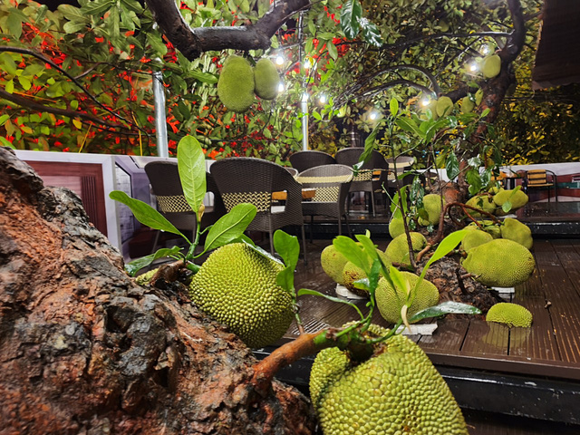 Quán cà phê độc lạ ở Tuyên Quang có cây mít trĩu quả mọc giữa nhà  - Ảnh 5.