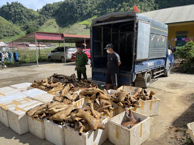 Phát hiện và tiêu hủy 1 tấn sản phẩm động vật bốc mùi hôi thối - Ảnh 1.
