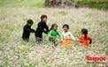 Hà Giang: Tam giác mạch bung nở rực rỡ sẵn sàng cho mùa Lễ hội hoa lớn nhất trong năm