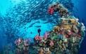 """Bí mật biển khơi: Những kỳ quan dưới mặt nước khiến bạn """"choáng ngợp"""""""