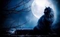 Các truyền thuyết kỳ quái về mèo đen