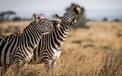 """""""Cười lật ghế"""" với loạt hình ảnh dễ thương từ cuộc sống động vật hoang dã"""