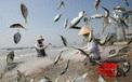 24h qua ảnh: Ngư dân gỡ cá khỏi lưới trên bãi biển ở Đà Nẵng