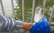 Thú vị câu cá không dùng cần, lưỡi câu ở Đà Nẵng