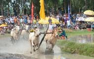 Cặp bò của ông Nguyễn Thành Tài đoạt hạng Nhất Hội đua bò Bảy Núi