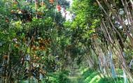 Xây dựng sản phẩm du lịch nông nghiệp sạch tại Đồng Tháp