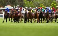 Hà Nội đề xuất xây trường đua ngựa 500 triệu USD