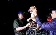 Theo chân đội quân bắt chó thả rông đầu tiên ở Hà Nội