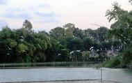 Mục sở thị đảo Cò ở TP. Thanh Hóa